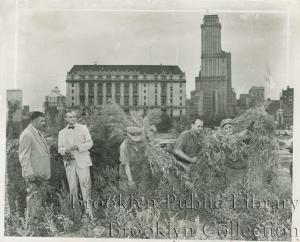 This Brooklyn Public Library image shows the White Wing Squad cracking down on a grow site within site of downtown Brooklyn.
