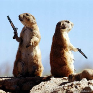"A different kind of duel, though maybe you could bet on it if knowledge of prairie dogs was a ""skill."""